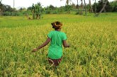 Positive Results Shown by Farmer's Welfare Schemes